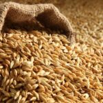 What is Malt? – How to Brew Beer with Malt