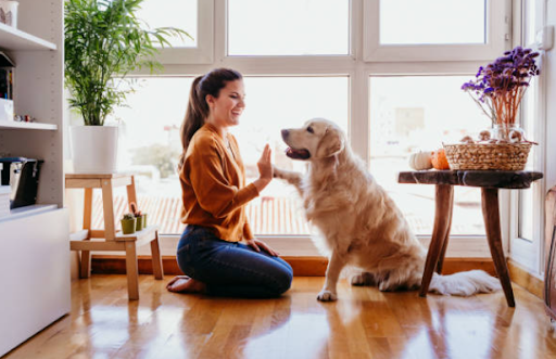 4 Tips To Find A Pet Sitter You Can Trust